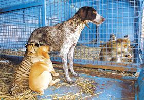La mamá perra, La hija tigresa... El amor de la naturaleza